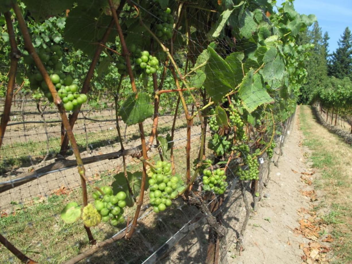 Prune Plants During Proper Season Columbian Com