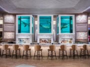 Damien Hirst's sculpture of a 13-foot tiger shark preserved in three tanks floats atop the The Palms' Unkown Bar and also inspired the name of Bobby Flay's new restaurant.