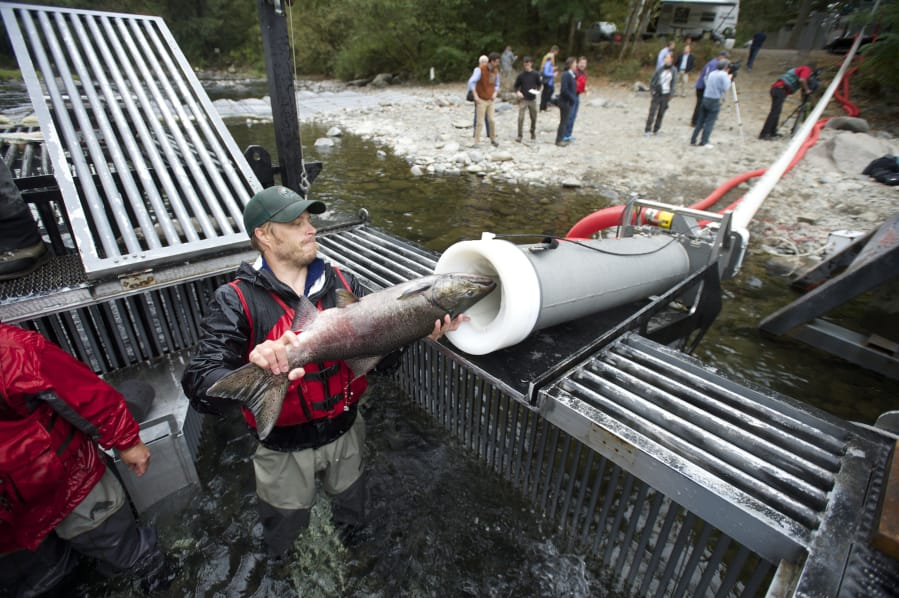 Company shares ?salmon cannon? technology?s power