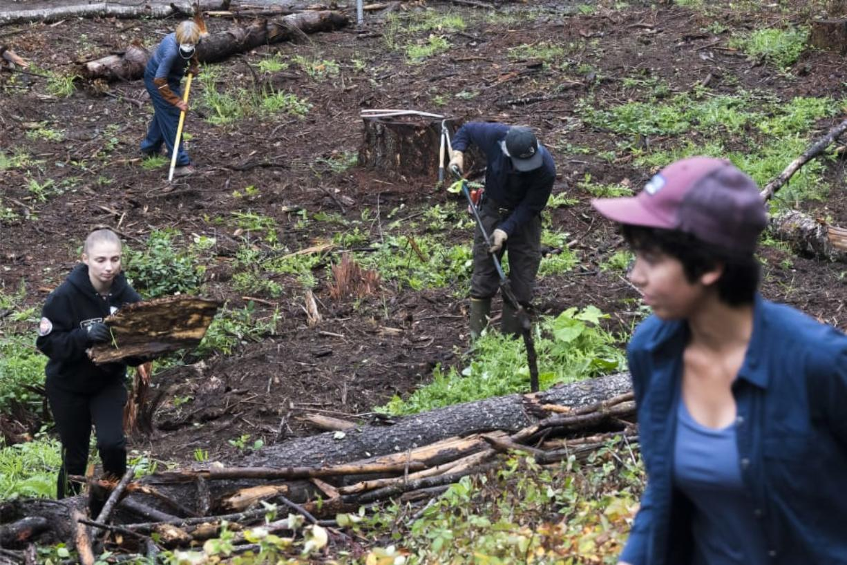 Volunteers clear branches and underbrush in the oak restoration area at the Ridgefield National Wildlife Refuge on Wednesday. Friends of the Ridgefield National Wildlife Refuge has received a $50,000 grant from the Cowlitz Tribe Education and Arts Fund.