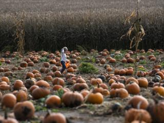 Fall Field Trip to Bi-Zi Farms