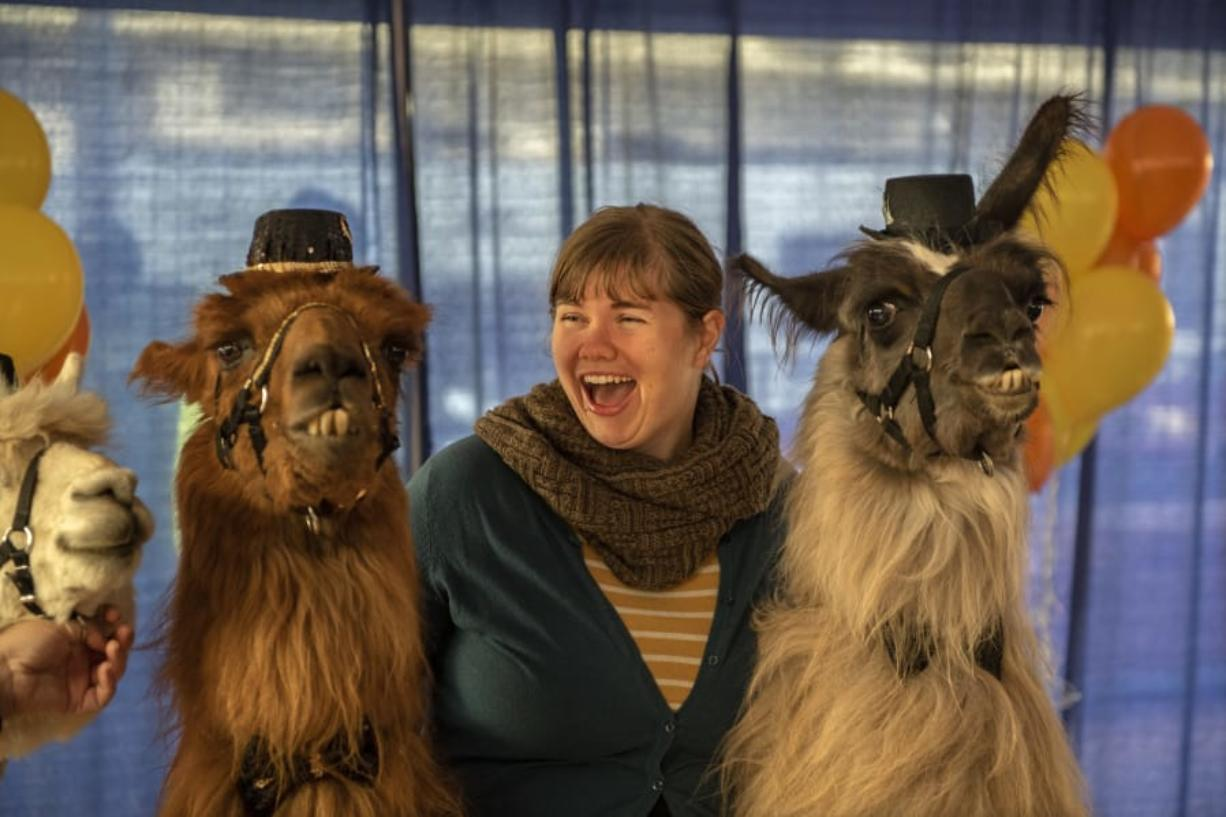 Jamie Jefferson of Portland poses Sunday with llamas Rojo, left, and Smokey, right, in Portland's Pioneer Courthouse Square during a celebration of Rojo's retirement after 12 years of celebrity and service. (Zach Wilkinson for The Columbian)