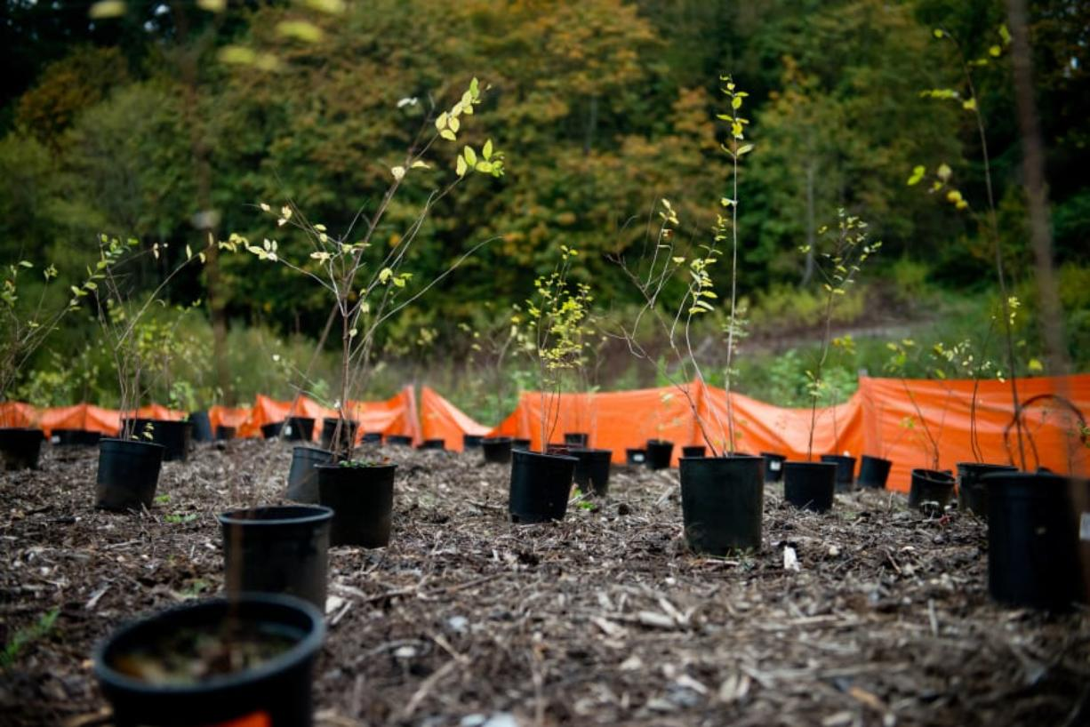 The Vancouver Watersheds Alliance will again organize volunteers to plant trees in the Burnt Bridge Creek watershed on Make a Difference Day on Oct. 26.