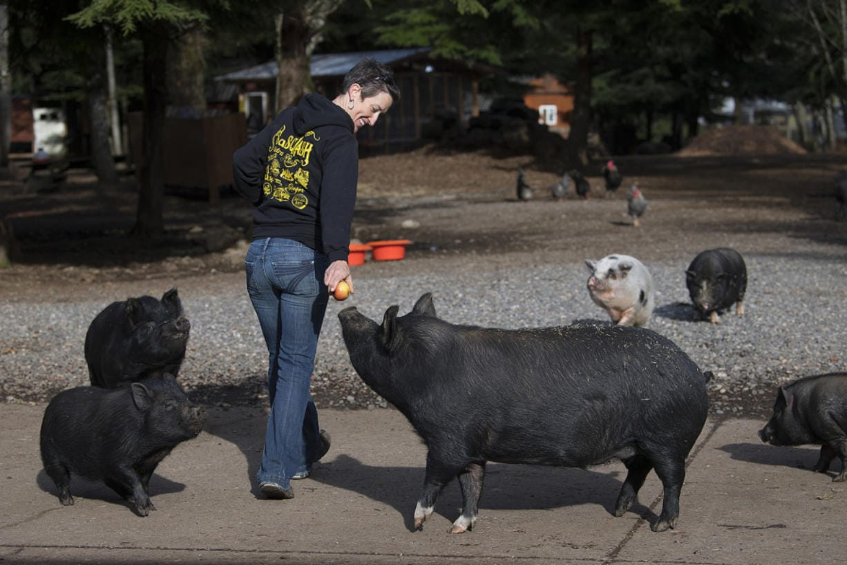 Wendy Smith of Odd Man Inn Animal Refuge near Washougal shares a snack with some four-legged friends. The animal refuge is home to some 130 animals, including 35 pigs.