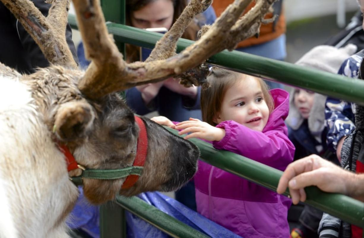 Amelia Palmier meets the reindeer at the Uptown Christmas in the Village Block Party in Vancouver, Wa., Saturday December 3, 2017. (Greg Wahl-Stephens for the Columbian)