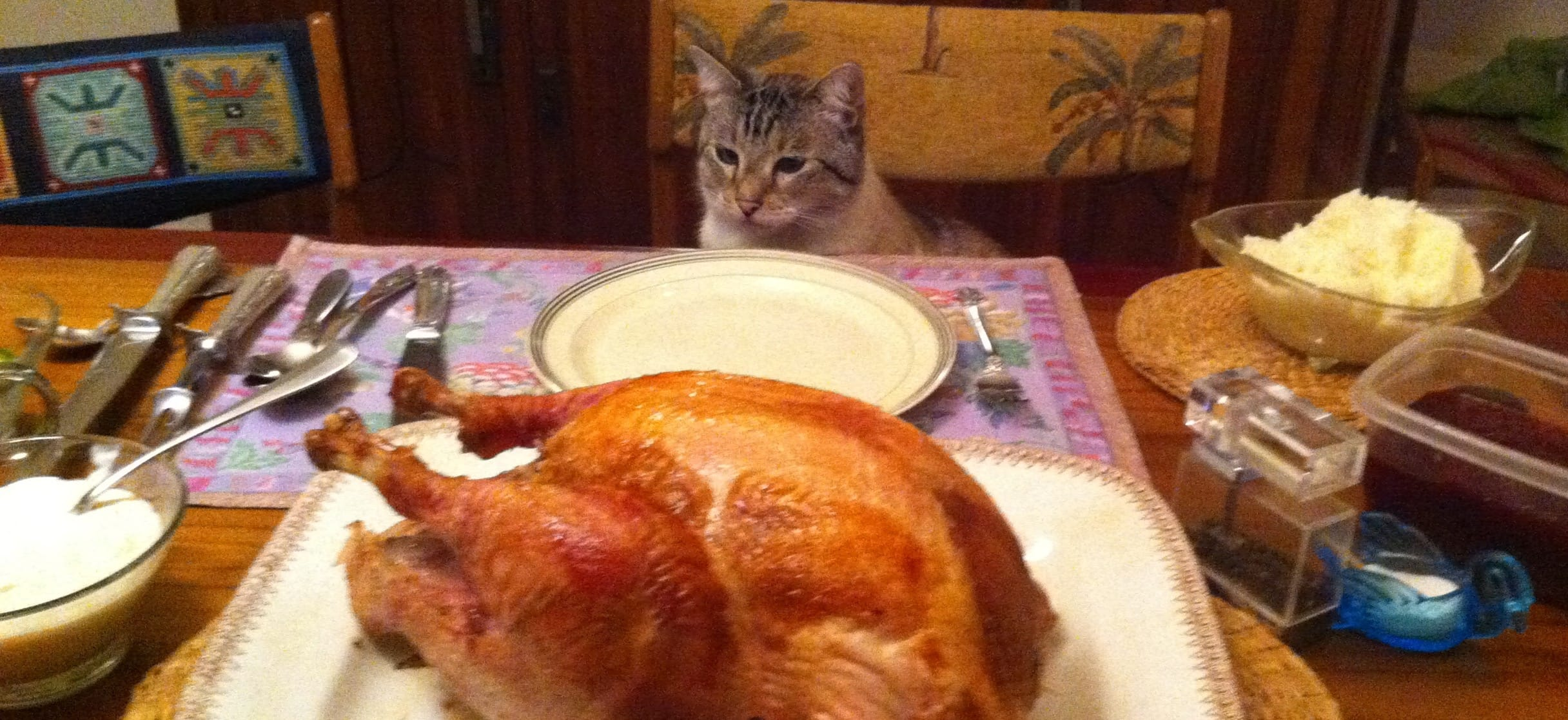 Ben, my cat, is thankful for the Thanksgiving feast. (Ellen Smart)