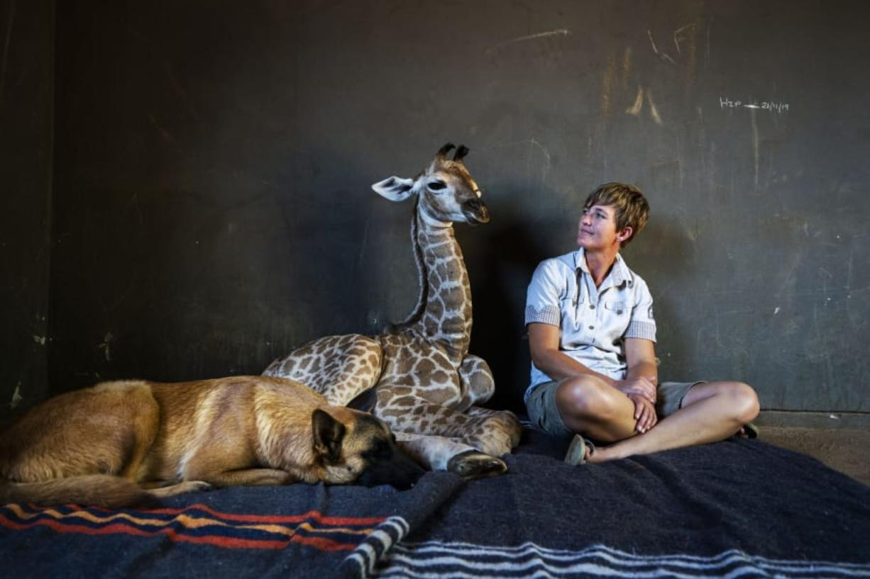 Hunter, a young Belgian Malinois, keeps an eye on Jazz, a nine-day-old giraffe, as orphanage worker Janie Van Heerden looks on last week at the Rhino orphanage in the Limpopo province of South Africa.