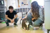 A cat named Renae looks for some attention from Tesslynn Escamilla, right, and Jacob Haas at the West Columbia Gorge Humane Society. (Samuel Wilson/ for the Columbian)