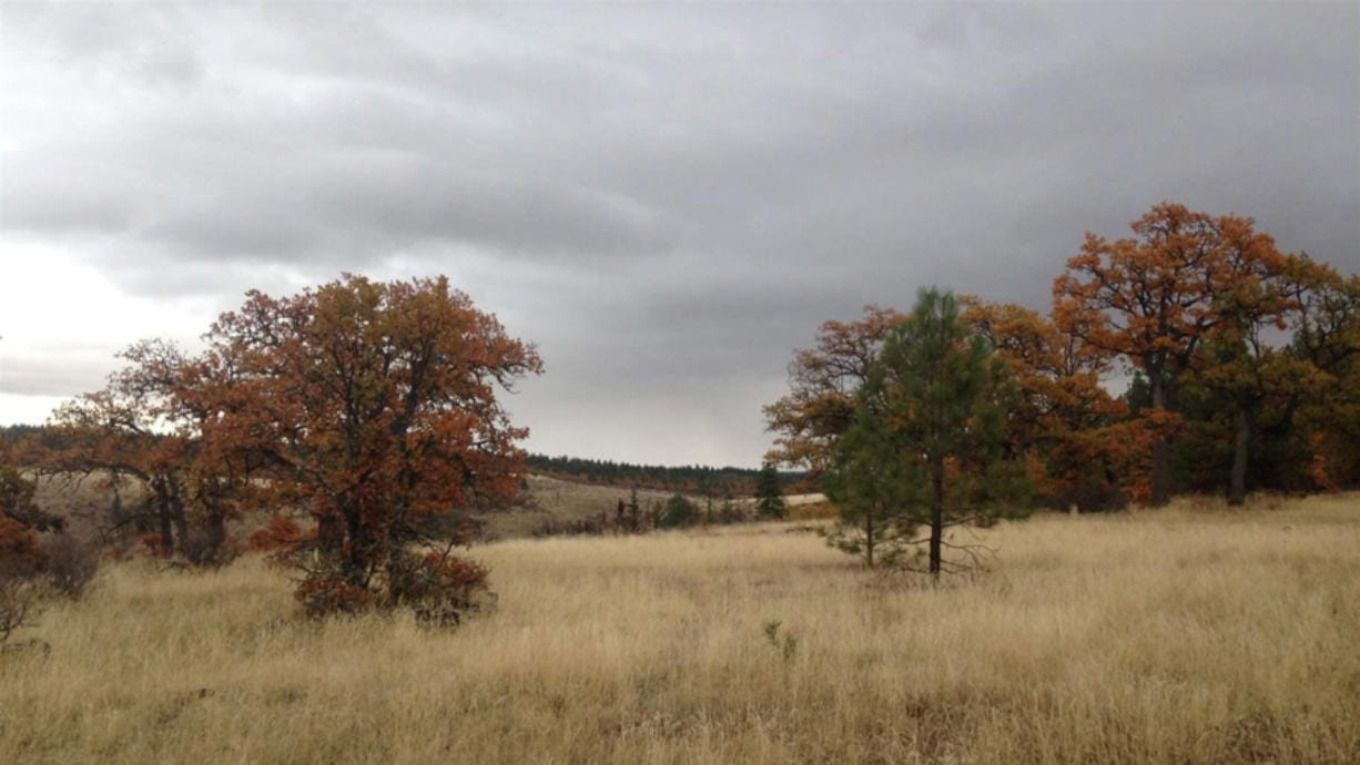 The White Eagle Memorial Preserve in Goldendale is a wilderness area of oak and ponderosa forest that conducts green burials on the land.