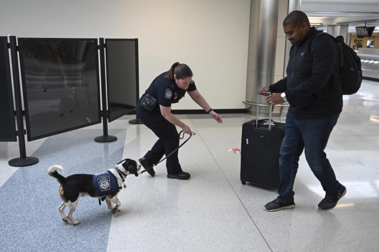 Phillip, a beagle, sniffs incoming passenger's luggage with his handler, Valerie Woo, a Customs and Border Patrol Agriculture Specialist and Canine Handler, at the international arrivals terminal at Dulles International Airport.