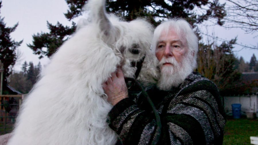 Caesar the No Drama Llama cuddles with Larry McCool at Mystic Llama Farm in December 2019 in Jefferson, Ore.