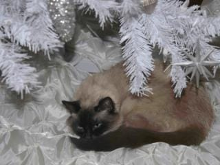 December reader photos: Holiday memories