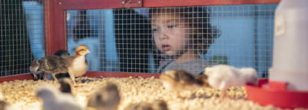 Clark County Fair through the eyes of a child