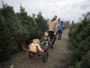 Washougal River Christmas Trees, a 160-acre farm, is open daily from 9 a.m. until 5 p.m. through Dec. 18.
