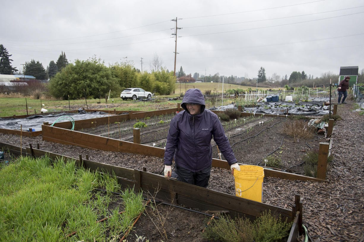 Sharon Kenoski, left, weeds under soggy conditions in one of her two plots in the 78th Street Heritage Farm community gardens on Monday morning. (Amanda Cowan/The Columbian)