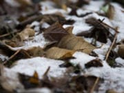 Monday's snowfall was barely enough to cover leaves in Yacolt. The National Weather Service expects more snow, but whatever accumulates should melt quickly with the high expected to reach 40 degrees Thursday afternoon.
