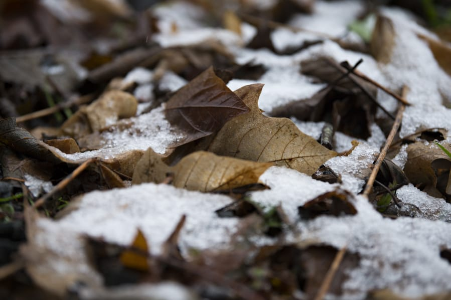 Monday's snowfall was barely enough to cover leaves in Yacolt. The National Weather Service expects more snow, but whatever accumulates should melt quickly with the high expected to reach 40 degrees Thursday afternoon. (Amanda Cowan/The Columbian)