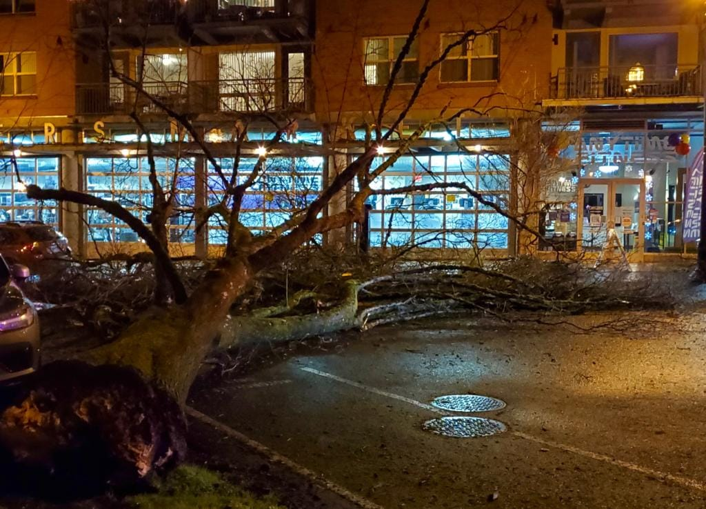 A large tree on the western edge of Vancouver's Esther Short Park toppled into Esther Street Saturday night. Witnesses said no one was injured and no property was damaged. City crews were working to remove the tree well into the night.