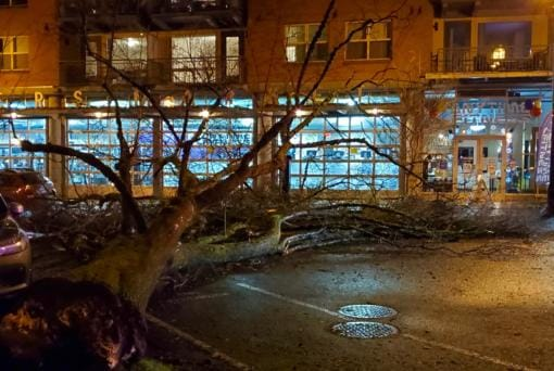 A large tree on the western edge of Vancouver's Esther Short Park toppled into Esther Street Saturday night. Witnesses said no one was injured and no property was damaged. City crews were working to remove the tree well into the night. (Courtesy of Kent Livingston)