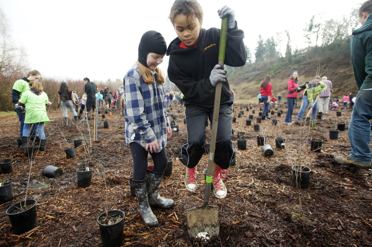 Volunteers plant trees along the Burnt Bridge Creek Greenway Trail as part of the annual MLK Day of Service in 2015. (The Columbian files)