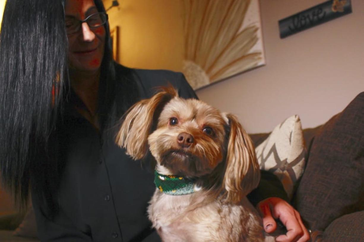 In this Nov. 5, 2019 photo, in St. Francis, Wis., Amy Carter looks at her Yorkshire terrier-Chihuahua mix Bentley, who has epilepsy. Carter, gives him CBD, which she says has reduced his seizures. The federal government has yet to establish standards for CBD that will help pet owners know whether it works and how much to give. But the lack of regulation has not stopped some from buying it, fueling a $400 million CBD market for pets that grew more than tenfold since last year and is expected to reach $1.7 billion by 2023, according to the cannabis research firm Brightfield Group.
