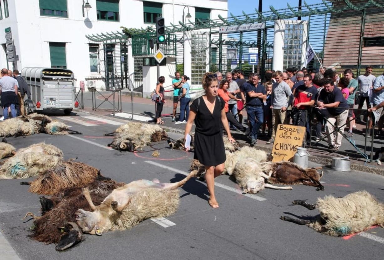 FILE - In this Sept. 2019 file photo, a woman walks among dead sheep, after farmers protesting against the rising bears attacks on sheep herds in Pyrenees mountains left the sheep in the sub-prefecture of Bayonne, southwestern France.
