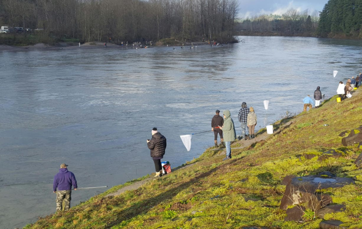 Smelt dippers line the bank at the Lion's Pride Park near Castle Rock. People came out in big numbers on Friday, Feb. 14, 2020, to take part in the first smelt dipping season in three years. (Jeff Otto/For The Columbian)