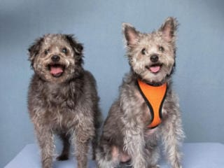 Pets of the Week, Feb. 28