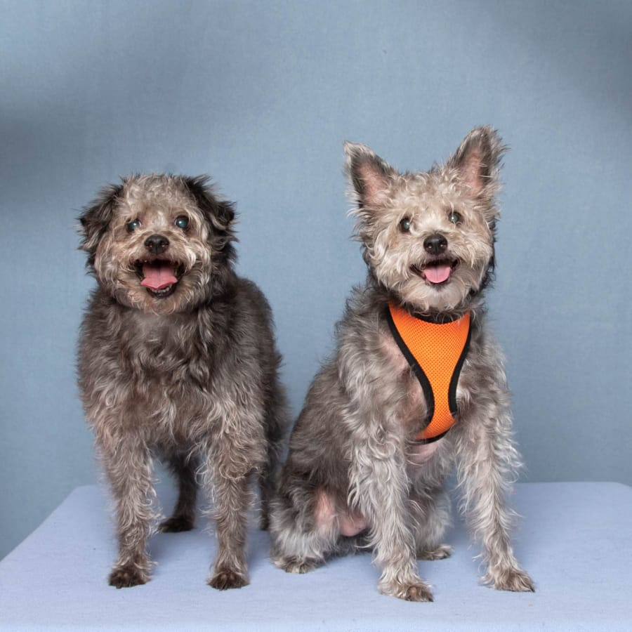 We are a bonded pair, looking for our new home together. We don't need much, just a family who appreciates all the wisdom that comes with age. We may not be the puppies we used to be, but we've still got lots of love to give. We would do best in an adult-only home. These pets are among those available for adoption from noon to 6 p.m. Tuesday through Sunday at the Humane Society for Southwest Washington, 1100 N.E. 192nd Ave., Vancouver. The Humane Society is closed to the public on Mondays. Fees — which can include registered microchip, health exam, a spay or neuter certificate and vaccination — vary. Call 360-693-4746.