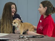 Alysia Meness of Vancouver chats with veterinarian Dr. Lauren Overman as Jalissa, her 7-year-old Chihuahua mix, is examined by a team from the Humane Society for Southwest Washington at the Open House Ministries free pet clinic Thursday in downtown Vancouver.