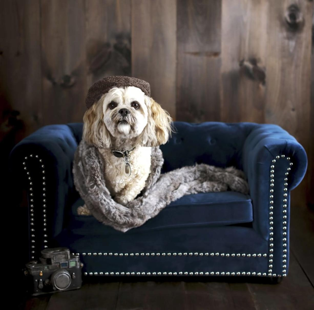 Pottery Barn's Chesterfield Pet Bed. Pottery Barn, Crate and Barrel, Ikea, Casper mattresses and other popular furniture purveyors have lines for pets, often in styles that complement their human-size living room furniture. (Pottery Barn)