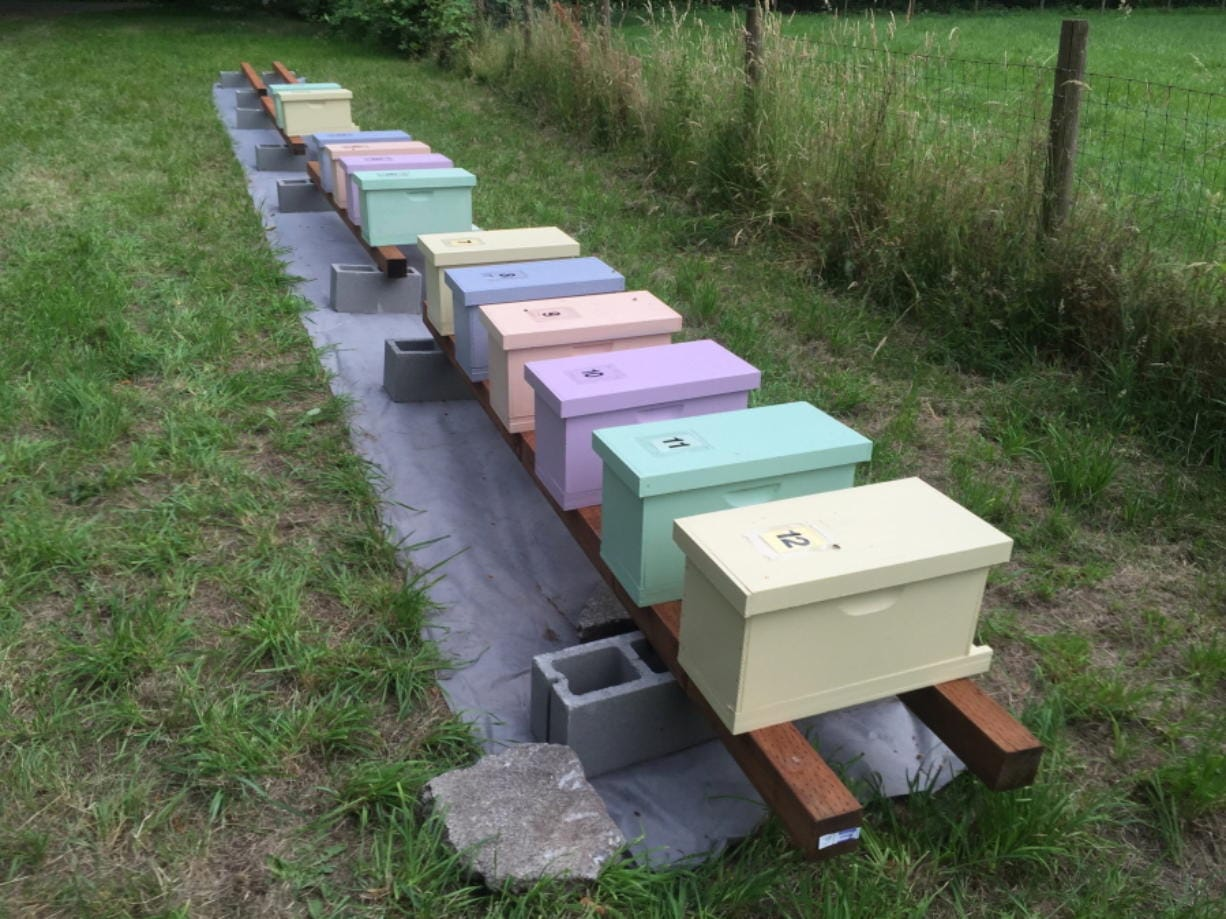 This photo taken July 1, 2016 shows a group of first-year honeybee hives in a pasture near Langley, Wash. Chemicals are routinely applied to kill insect pests and troublesome weeds but many are indiscriminate, devastating beneficial insects in the process. Landowners should avoid using pesticides in areas attractive to pollinators and instead use non-toxic methods to get rid of such pests as aphids.