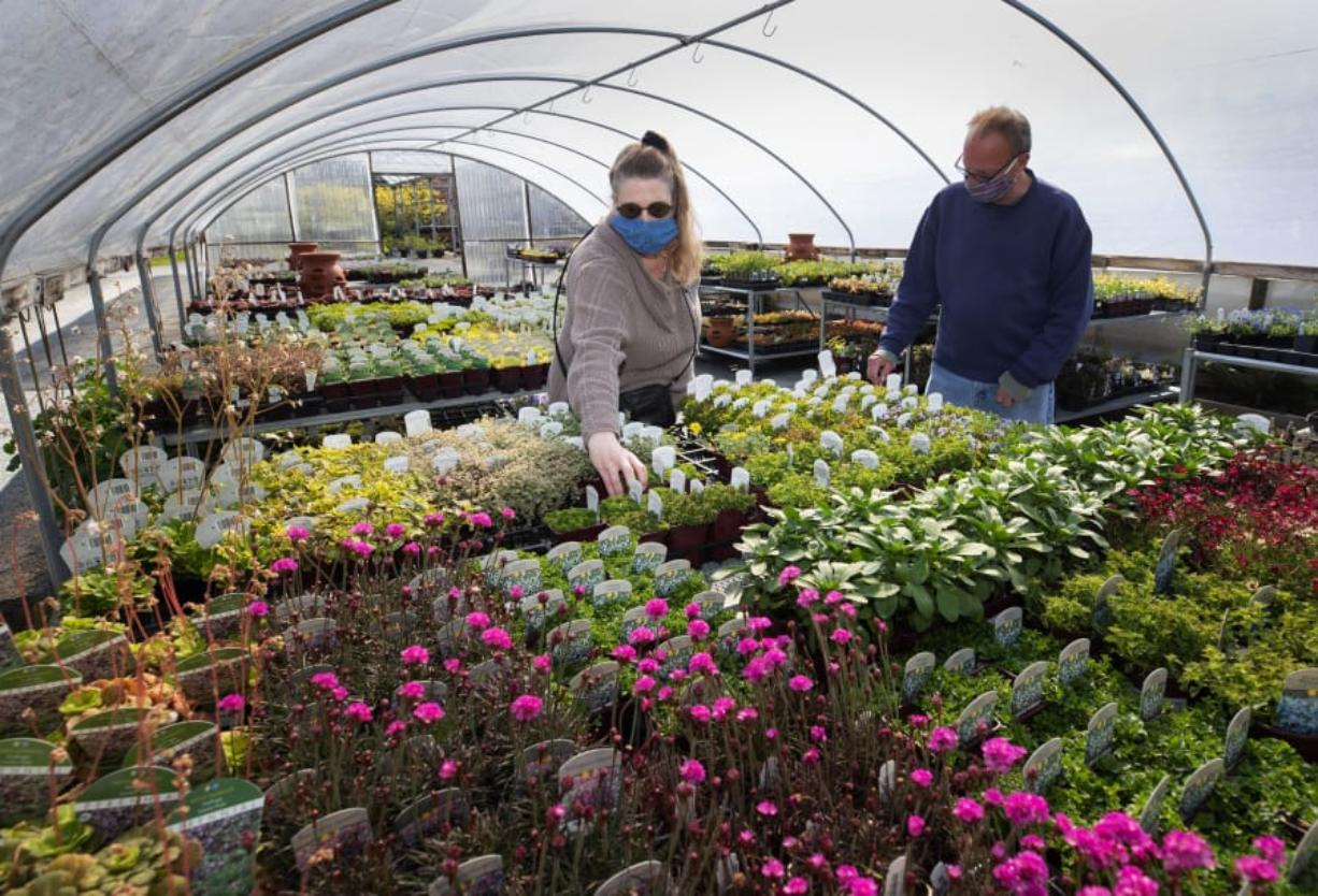 Athena Byrd, left, and Steven Klute, regular shoppers at Zenith Holland Gardens in Des Moines, check out the selection at the nursery on April 17. They were planning to get vegetable starts. (ellen m.