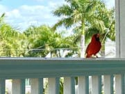 A cardinal -- brilliantly red and always singing-- became our only outside guest while we sheltered in place.
