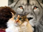 Furry Friends is still offering cat adoptions by appointment only. Gracie is one of the cats currently up for adoption.