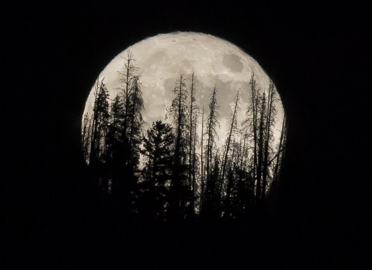 FILE - In this Nov. 14, 2016 file photo, evergreen trees are silhouetted on the mountain top as a supermoon rises over over the Dark Sky Community of Summit Sky Ranch in Silverthorne, Colo., Monday, Nov. 14, 2016. A supermoon will rise in the sky Tuesday evening, April 7, 2020, looking to be the biggest and brightest of the year.  Not only will the moon be closer to Earth than usual, it will also be a full moon.