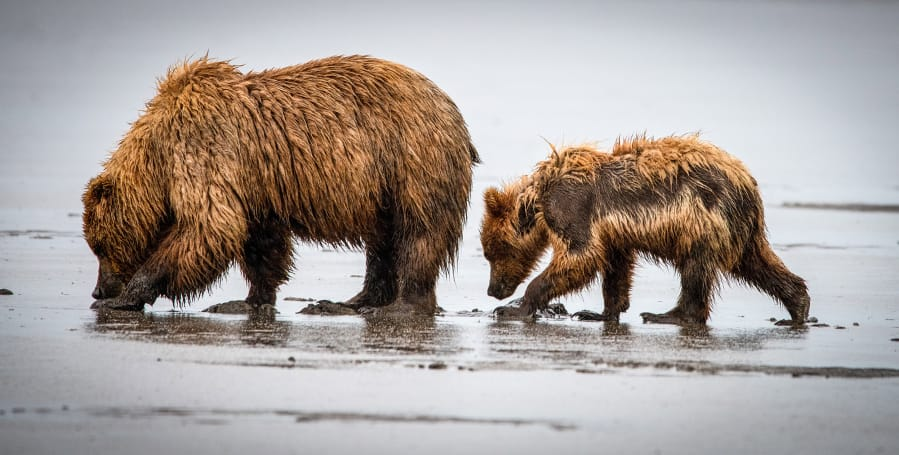 """""""Lessons from Mom,"""" a photo of a female grizzly bear and her cub, appears in the book """"Available Light: Awakening Spirituality Through Photography."""" (David Tinney)"""