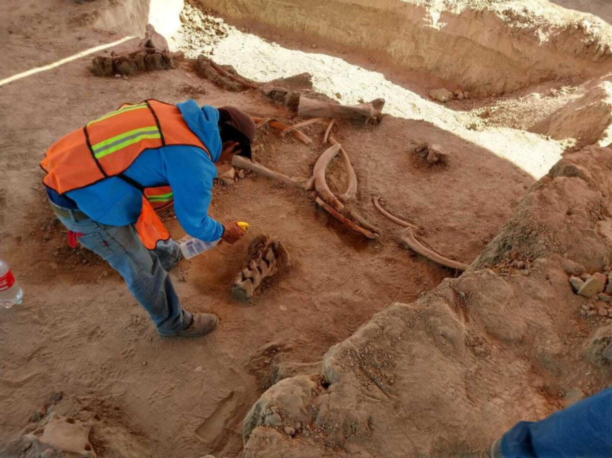 In this undated photo released on May 21, 2020 by Mexico's National Institute of Anthropology and History (INAH), an archaeologist works at the site where bones of about 60 mammoths were discovered at the old Santa Lucia military airbase just north of Mexico City. Institute archaeologist Pedro Sanchez Nava said the giant herbivores had probably just got stuck in the mud of an ancient lake, once known as Xaltocan and now disappeared.
