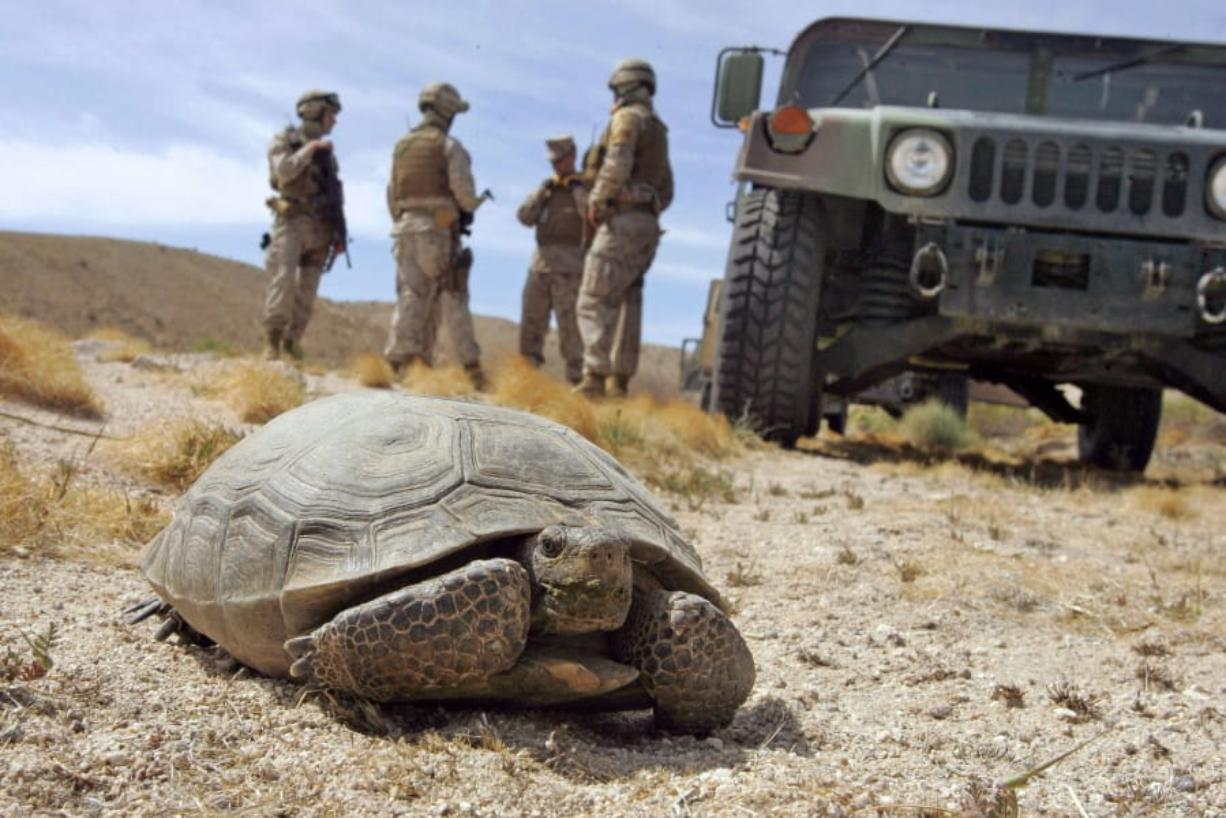Marines wait April 4, 2008, for a desert tortoise to move off the road at the U.S. Marine Corps' Air Ground Combat Center at Twentynine Palms, Calif. The Trump administration has given approval a solar energy project despite objections from conservationists who say it will destroy habitat critical to the survival of the threatened Mojave desert tortoise in southern Nevada.