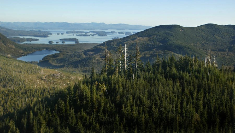 Giant old growth trees poke their heads out from the second growth on a mountain overlooking the Broken Islands off of Vancouver Island on October 15, 2002.