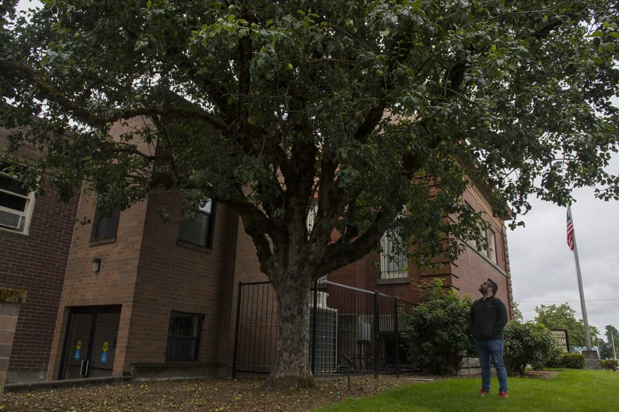 Brad Richardson, executive director of the Clark County Historical Museum, looks over one of the better known descendants of the Old Apple Tree. It's outside the museum in Uptown Village.