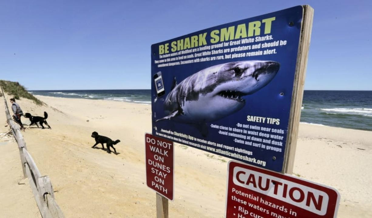 A woman walks May, 22, 2019, with her dogs at Newcomb Hollow Beach in Wellfleet, Mass., where a boogie boarder was bitten by a shark in 2018 and later died of his injuries. Cape Cod's beaches and towns may be quieter because of the 2020 coronavirus pandemic, but officials are reminding visitors ahead of the July 4 holiday that the famous destination also remains a popular getaway for great white sharks.