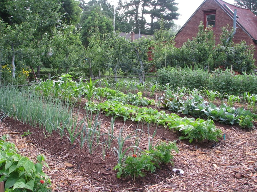 A surprisingly large number of vegetables can be harvested from even a small vegetable garden.