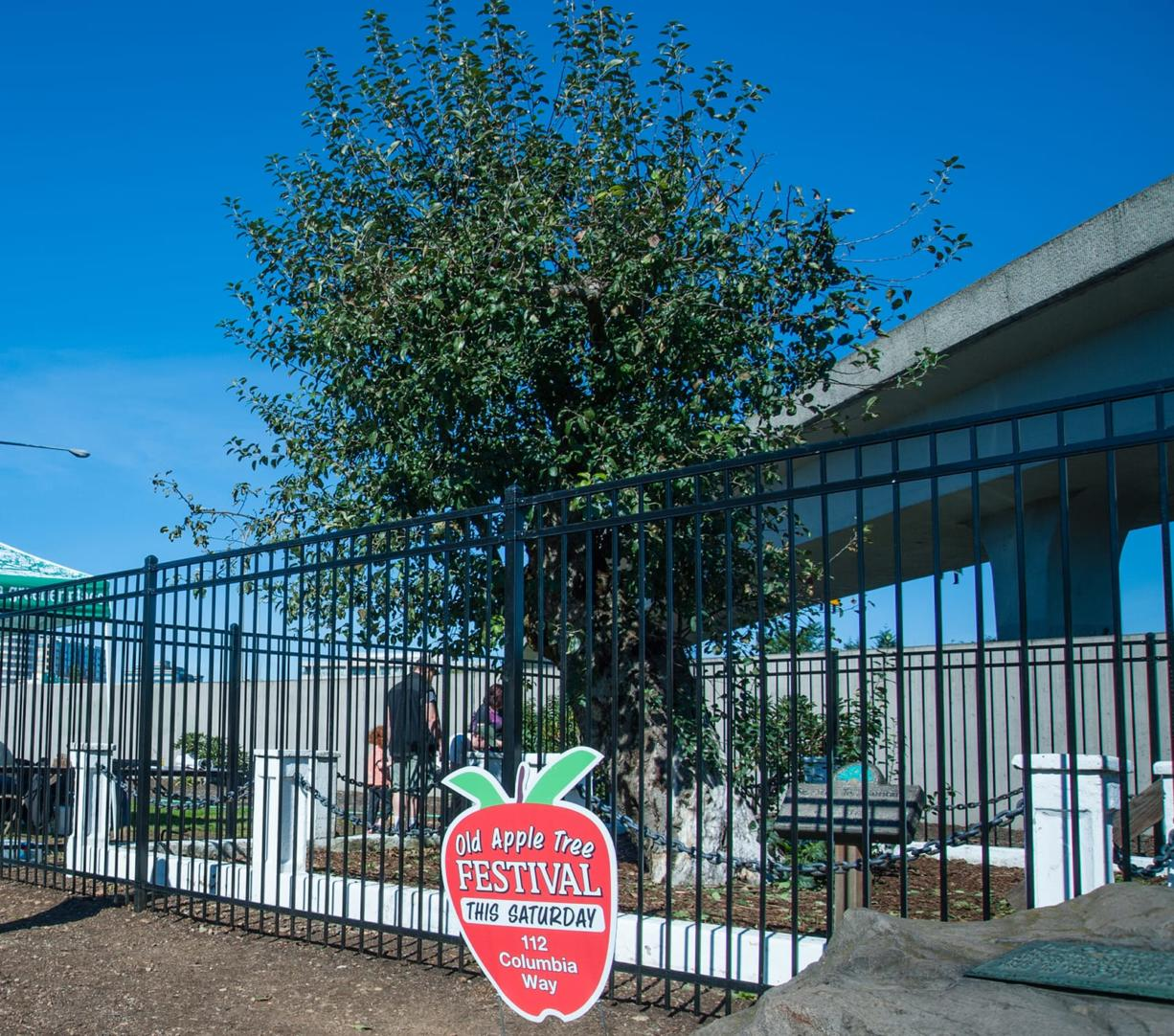 The Old Apple Tree, shown during the 2018 Old Apple Tree Festival, died recently at age 194.
