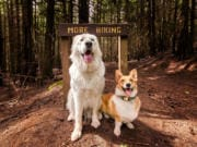 Bella and Maverick take a break on Liberty Creek Loop for a quick photograph.