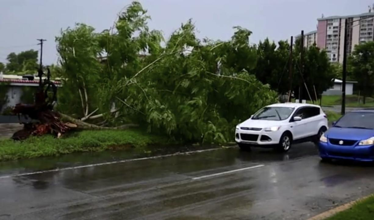 In this image made from video, a large tree toppled by tropical storm winds is seen in Alto Trujillo, Puerto Rico, Thursday, July 30, 2020. Tropical Storm Isaias knocked out power and caused flooding and small landslides across Puerto Rico and the Dominican Republic on Thursday as forecasters predicted it would strengthen into a hurricane while moving toward the Bahamas and U.S.