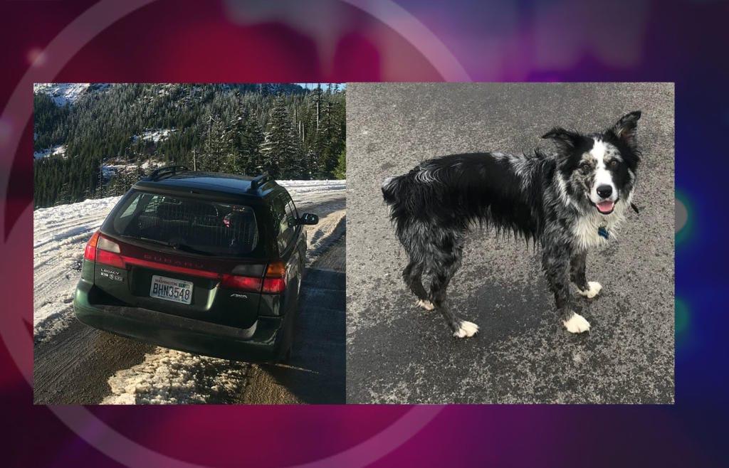 Gail Krueger's Subaru and dog, Drew, were stolen Wednesday in Vancouver.