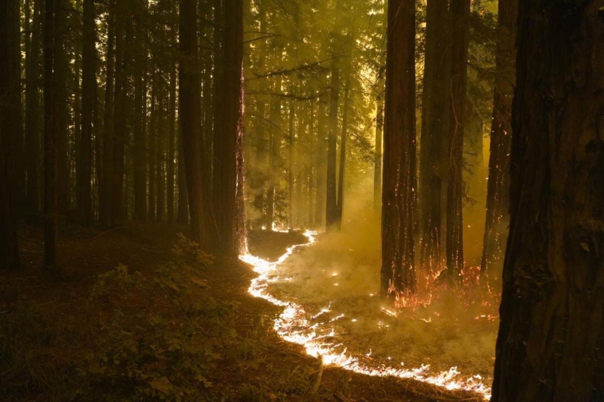 A forest burns as the CZU August Lightning Complex Fire advances, Thursday, Aug. 20, 2020, in Bonny Doon, Calif.