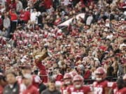 In this Nov. 16, 2019, photo, a packed crowd looks on as Washington State mascot Butch T. Cougar performs during an NCAA college football game between Washington State and Stanford in Pullman, Wash. The athletes weren't the only ones impacted when Washington State's fall football season was canceled by the coronavirus pandemic. Merchants in tiny Pullman, who depend on big football crowds, say they are losing a major chunk of their annual income. Pullman, the most remote outpost in the PAC-12, has only 34,000 residents and many businesses in town depend on visitors attracted by football games, graduation and other special events.