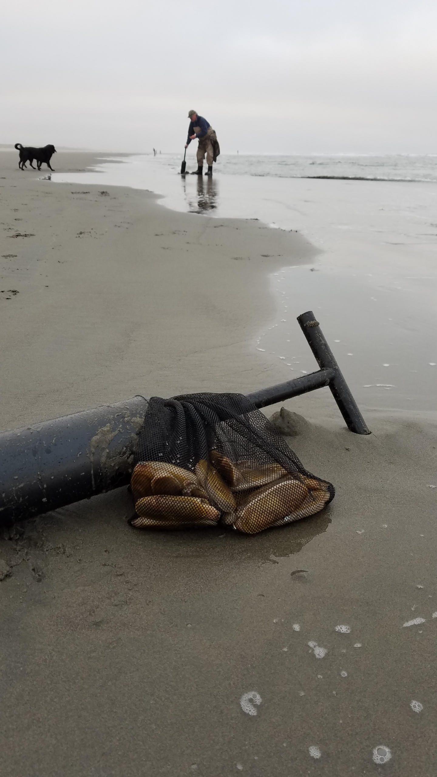 Razor clam digging at Mocrocks Beach OK'd for Saturday, Monday